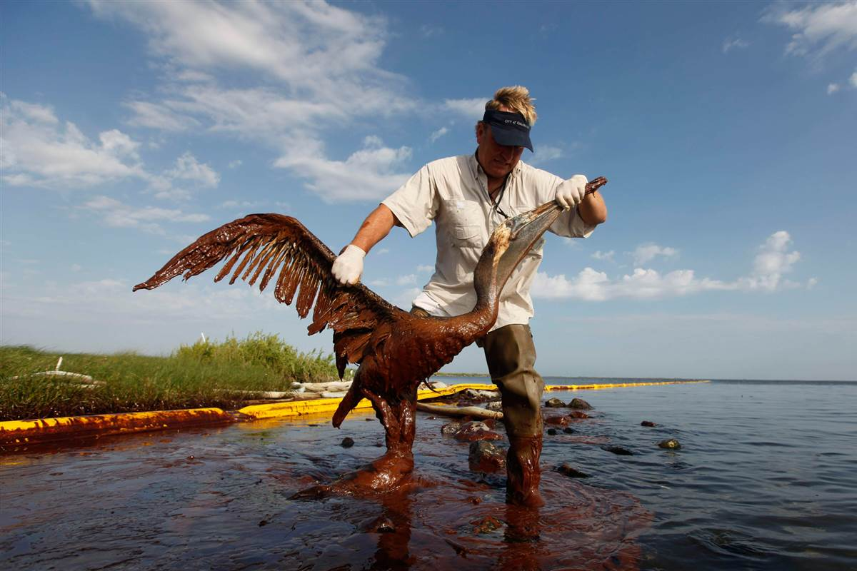 gulf of mexico oil spill essay help